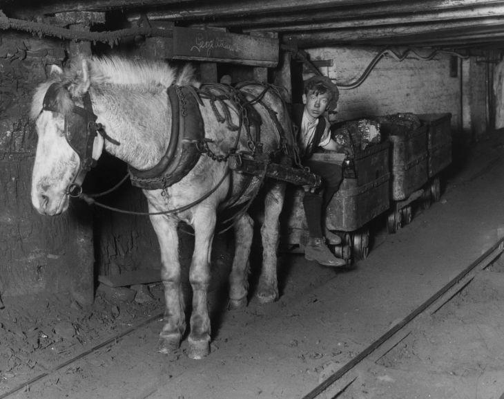 Pit pony, 1920